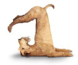 mad dog stretching